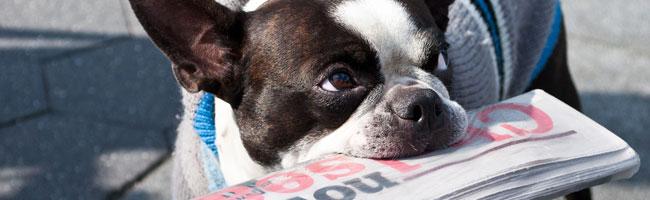 A Dog with a Newspaper In Its Mouth